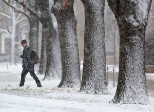 A pedestrian on the UW-Madison campus makes his way through a line of snow-covered trees Tuesday as a winter storm moves through the area.  The storm was accompanied by thundersnow - lightning and thunder that occur during a snowstorm. (Photo credit:  John Hart, State Journal)